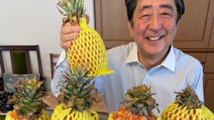 日本前首相安倍晋三推特上传图片