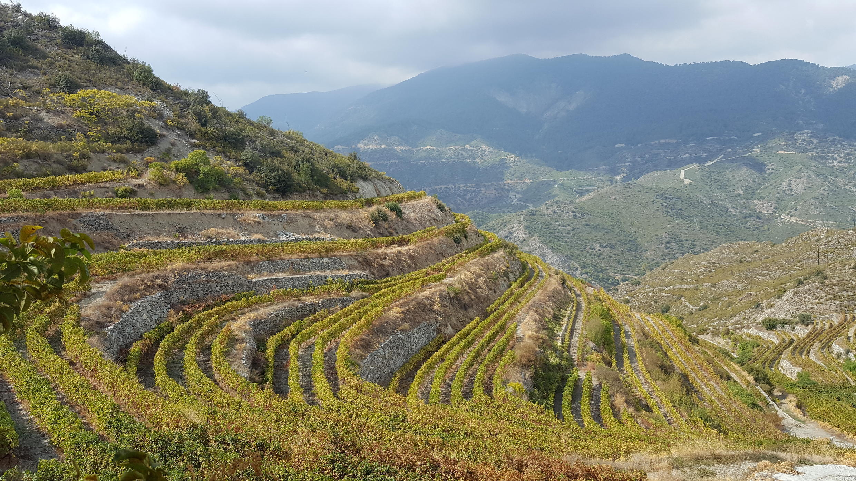 Des vignes en terrasses de la propriété Tsiakkas, dans la région de Limassol, au sud de Chypre.