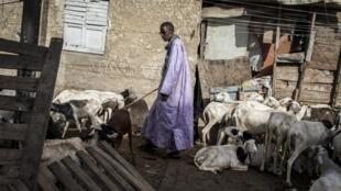 Un vendeur de moutons au marché de Dakar le 23 mai 2020.