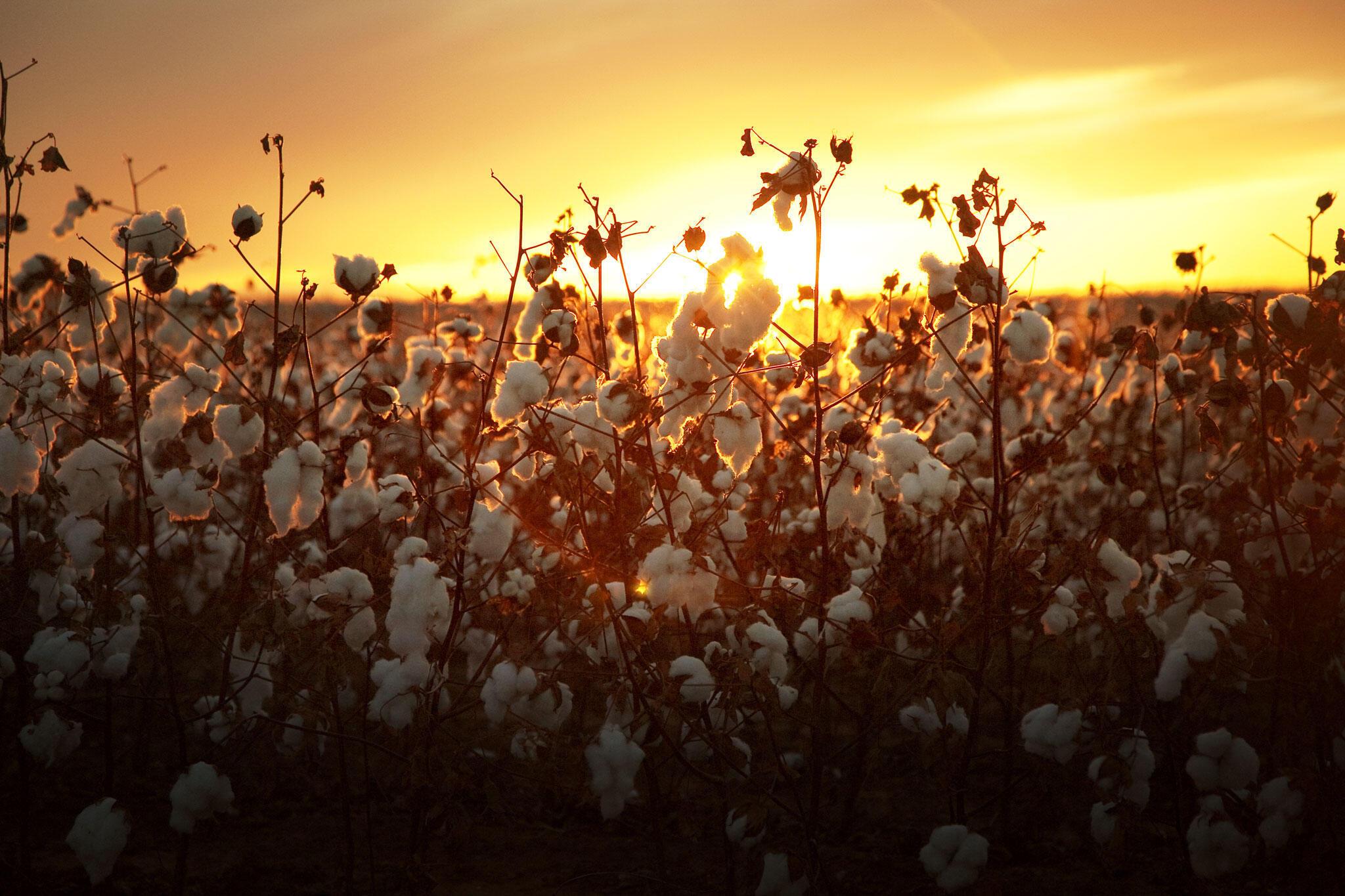 Au Togo, la zone industrielle intégrée d'Adétikopé a pour but d'attirer les industries de transformation dans les filières coton, soja et anacarde.