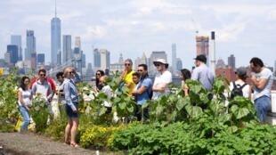 De plus en plus de New-yorkais s'intéressent aux fermes urbaines.