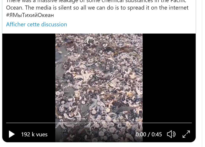 俄罗斯远东勘察加海域污染,大量海洋生物陈尸Khalaktyrsky海滩2020年10月