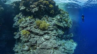 Arrecife de gran tamaño en el mar rojo.
