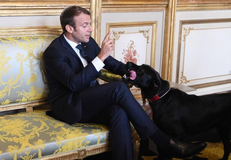 O presidente francês Emmanuel Macron e seu cachorro, Nemo.