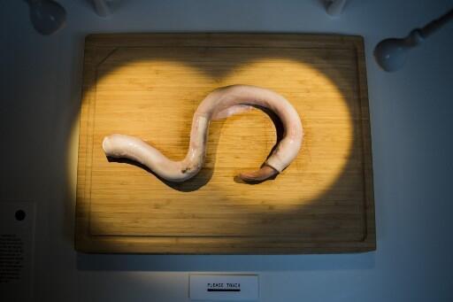 A exposição tem 80 dos alimentos mais repugnantes do mundo, onde os visitantes aventureiros têm a oportunidade de cheirar e provar alguns desses alimentos notórios, como o pênis de toro cru.