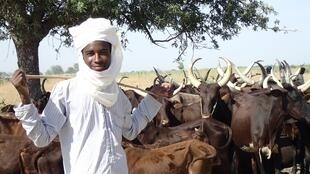 Un éleveur et son troupeau.