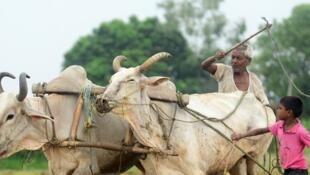 En Inde, 9 cultivateurs sur 10 possèdent moins de 5 hectares de terre et sont donc vulnérables à ce marchandage.