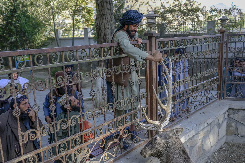 Un combatiente talibán agarra los cuernos de un ciervo en el zoo de Kabul, el 17 de septiembre de 2021