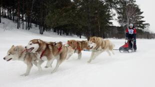Un musher russe conduit une équipe de chiens de traîneau malamute d'Alaska lors d'une course à l'extérieur de Kemerovo le 19 mars 2011.
