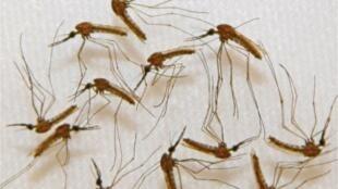 Número de casos de paludismo na Cidade da Praia começou a diminuir.