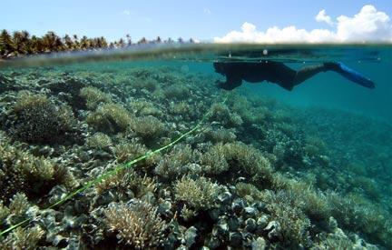 Napuka est un atoll situé dans l'archipel des Tuamotu en Polynésie française.