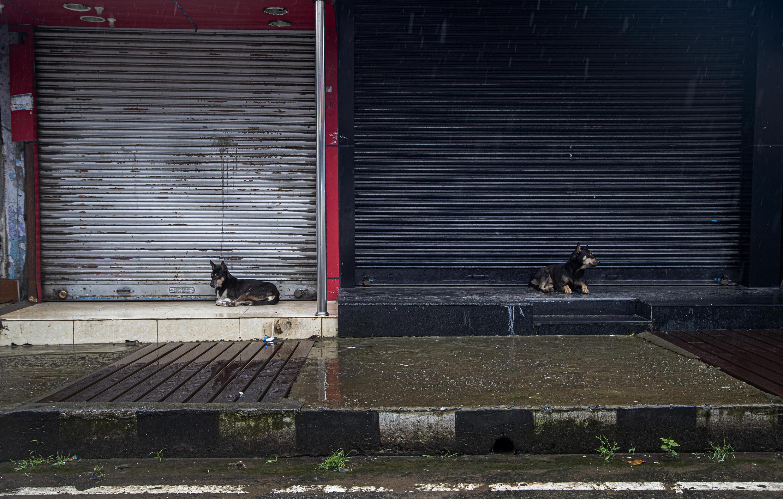 Индия. Бездомные собаки у закрывшихся из-за пандемии магазинов в городе Гувахати