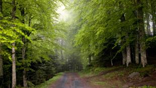 Forêt de la Masse, en Auvergne.