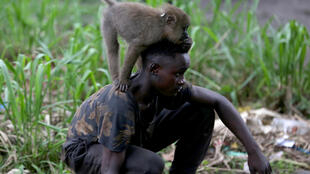 A boy plays with a monkey in the courtyard of a house in Moanda