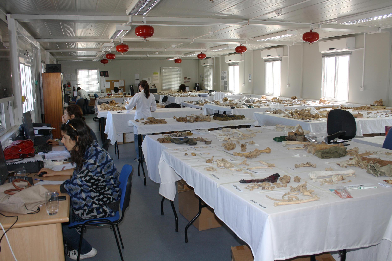 Dans un laboratoire de Nicosie, les techniciens tentent de reconstituer les squelettes des disparus à partir d'ossements exhumés.