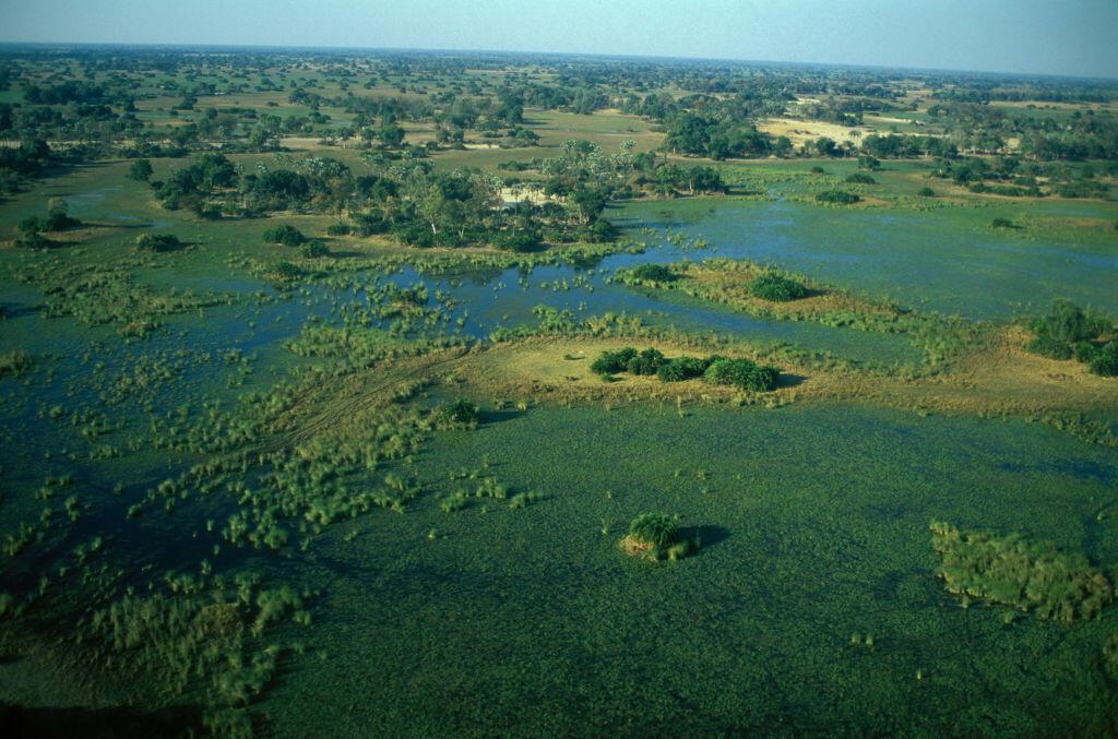 Le fleuve Okavango se perd dans les sables du Kalahari. C'est là, dans le nord du Botswana que vivaient nos ancêtres communs.