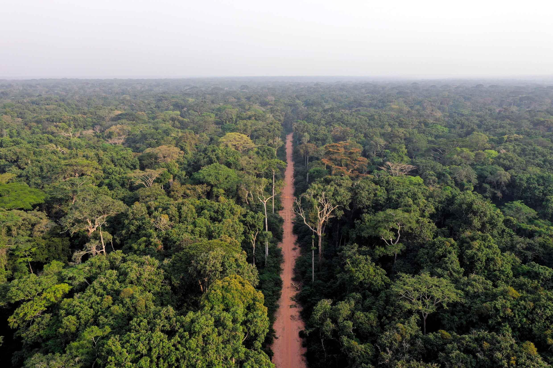 Forêt nord Congo route - Le coq chante - environnement - Afrique centrale