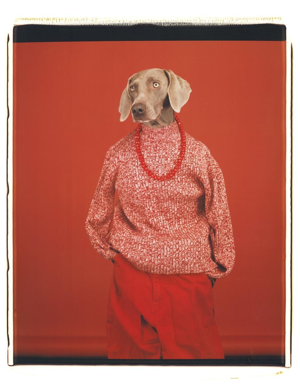 """William Wegman, """"Casual"""", 2002. Cortesia do artista e da galeria Sperone Westwater."""