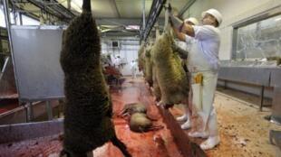 Dans un abattoir de la banlieue de Lyon, des employés préparent les moutons destinés à la célébration de l'Aïd el-Kébir.