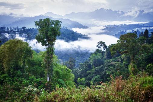 C'est dans la région de l'Oriente peu accessible, sillonnée de différents affluents du fleuve Amazone, qu'est concentrée la quasi-totalité des ressources pétrolières de l'Équateur.