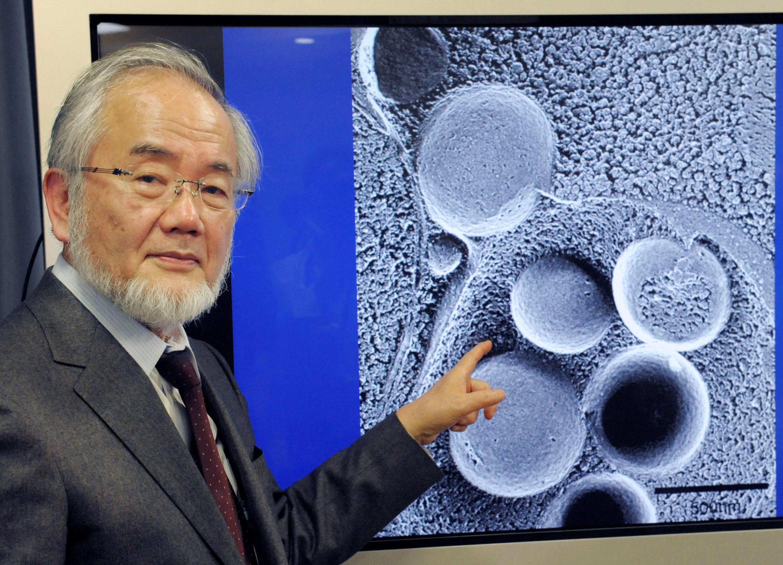 Биолог Есинори Осуми стал лауреатом Нобелевской премии по медицине за 2016 год