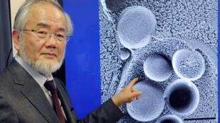 Yoshinori Ohsumi, Prémio Nobel de Medicina 2016