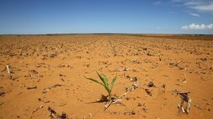 São várias as regiões da África austral fustigadas pela seca caso aqui na África do Sul.