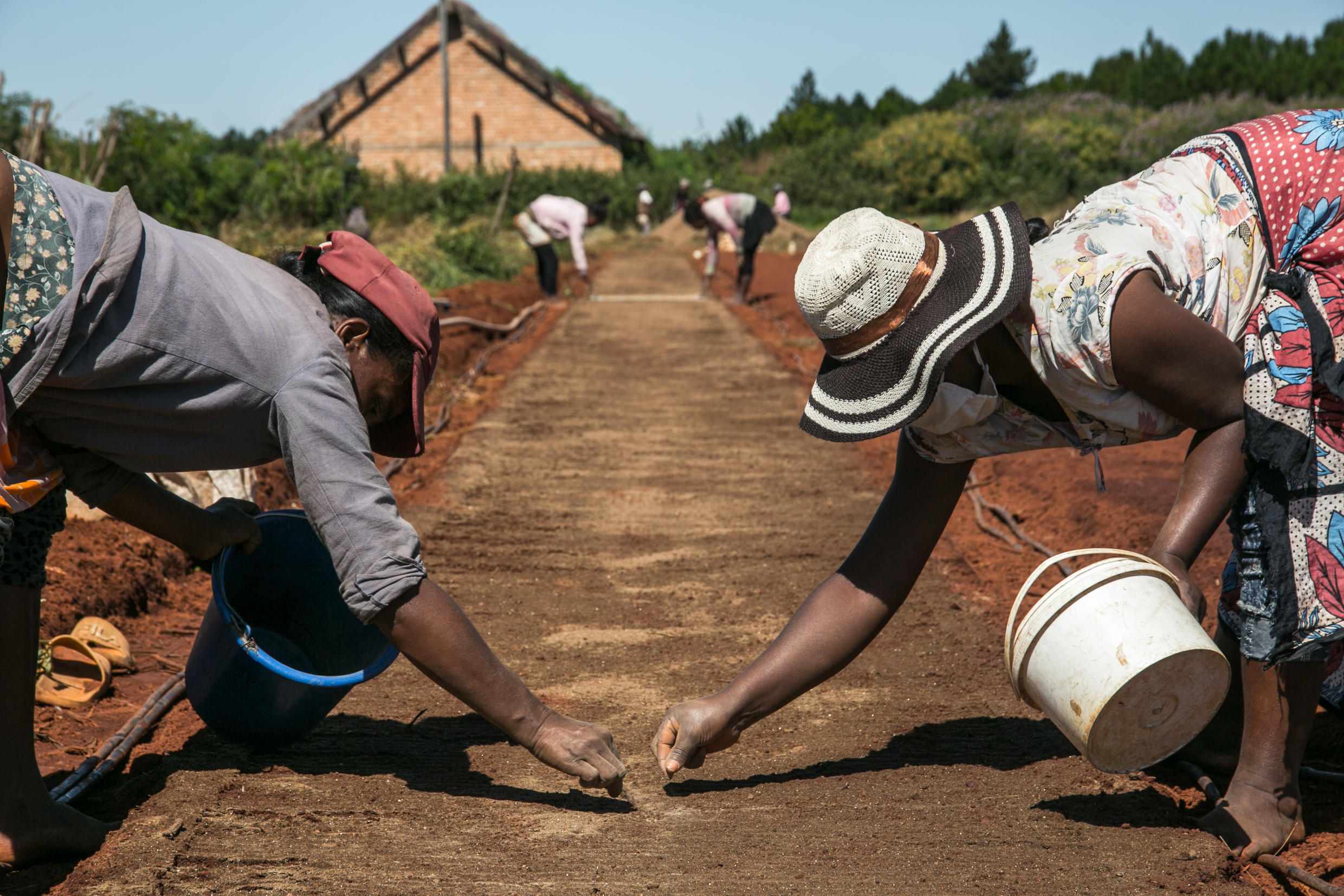 Bionexx employees sow artemisia seeds at a nursery for growing seedlings that will be sold to local farmers, near the village of Faharetana, near Antananarivo, 19 May 2020.