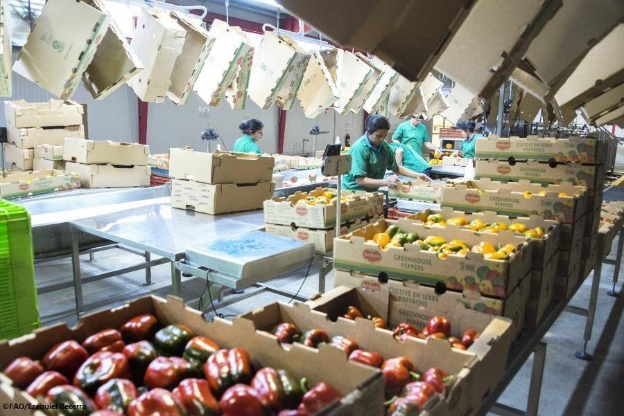 Segundo a FAO, o aumento dos preços dos alimentos foi de 4,2% em junho.