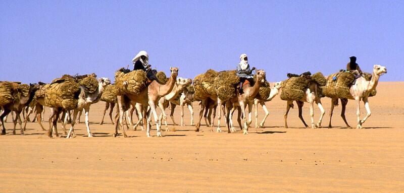 Caravane de sel au Niger.