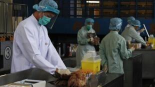 中国广东H7N9型禽流感病毒的疫情仍在继续