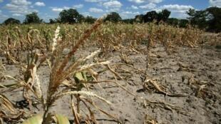 L'Arc, mutuelle panafricaine de gestion des risques, se propose d'indemniser les victimes de catastrophes naturelles, comme les sécheresses.