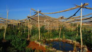 Le jardin du Cipa initié par Pierre Rabhi, inspirateur du travail de Terre et Humanisme.