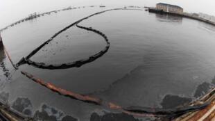 受黑潮严重污染的大连海湾。2010年七月十九日。