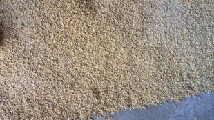 La Guinée-Bissau importe chaque année près de 120 000 tonnes de riz.