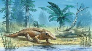 Une reconstitution de Chroniosuchus paradoxus. La morphologie des anthracosaures évoque celle des crocodiles ou des caïmans actuels. Le crâne du genre Chroniosuchus présente de grandes ouvertures naturelles entre les orbites et les narines (fenêtres pré-o