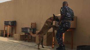 Une démonstration à la brigade canine de Cotonou. En général, un chien renifleur met 15 à 20mn pour fouiller 200 bagages.