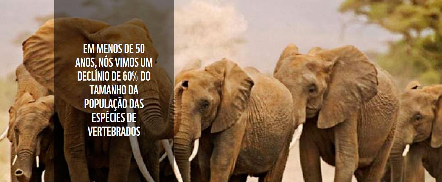 Dados do relatório planeta vivo da WWF publicado nesta terça-feira (30).