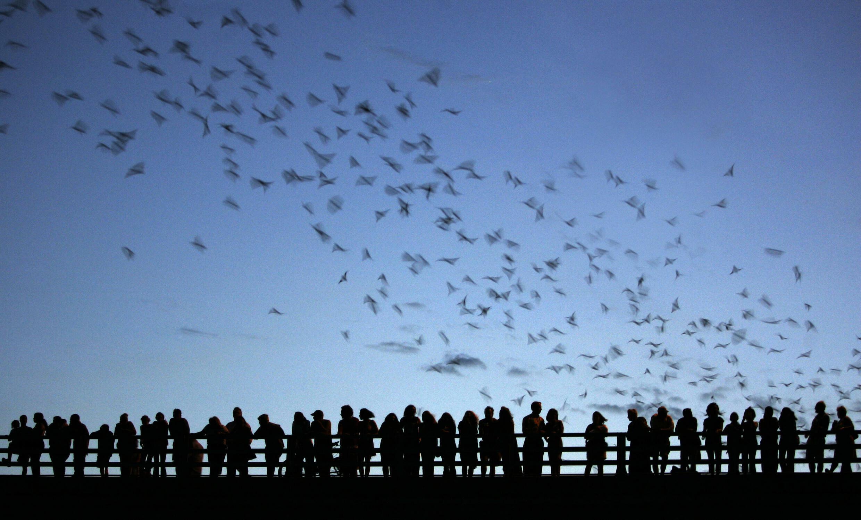 El 40% de las 1.321 especies de murciélagos evaluadas en la lista roja de la Unión Internacional para la Conservación de la Naturaleza está en peligro
