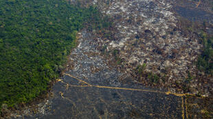 The protection of the Amazon is a concern for EU countries