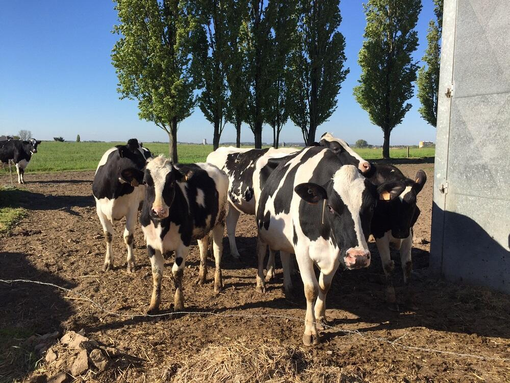 Des OGM interdits en Europe ont ét distribués à des animaux (photo d'archives).