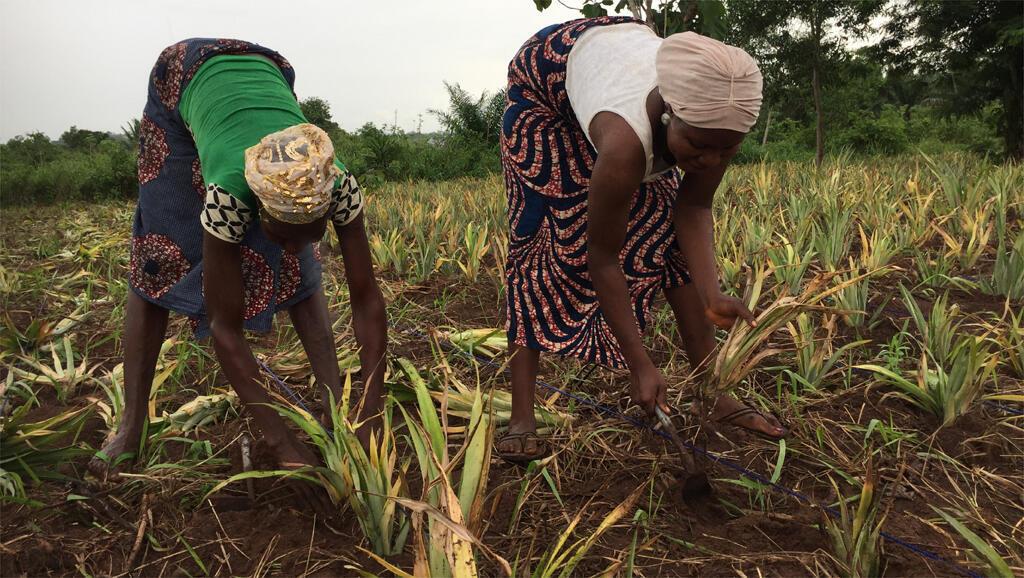 Des femmes aux champs au Bénin.