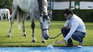 Showjumping groom Sean Vard with horse Clooney 51