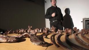 Le paléontologiste Adam Yates a annoncé la découverte d'un nouveau dinosaure, l'Aardonix.