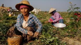 2021-04-30T062221Z_508524888_RC266N9L172E_RTRMADP_3_MYANMAR-POLITICS-POVERTY