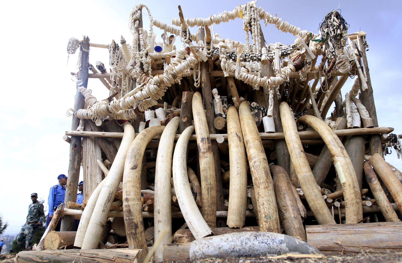 Chuẩn bị thiêu hủy 6,1 tấn ngà voi tịch thu được từ nạn buôn lậu tại Ethiopia, ngày 20/03/2015.