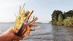 Canudos de plástico são os maiores poluidores dos oceanos
