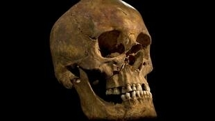 The skull of a skeleton found at the Grey Friars excavation site in Leicester, thought to be that of King Richard III