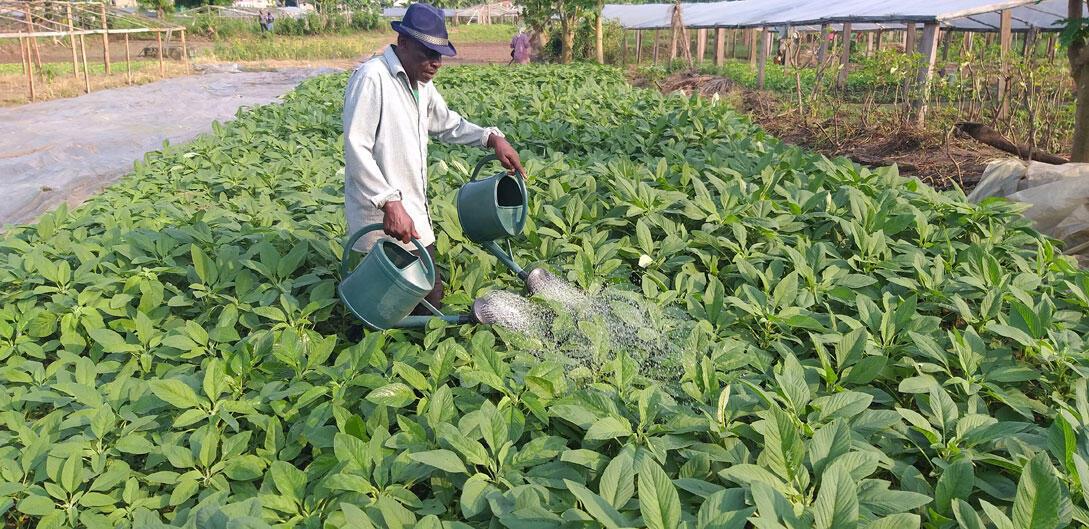Alain Ekondzongo, président de la coopérative des maraichers et éleveurs du Gabon dans son site d'exploitation, le 19 février 2020.