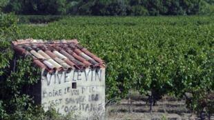 Un vignoble de la région Occitanie dans le sud de la France.